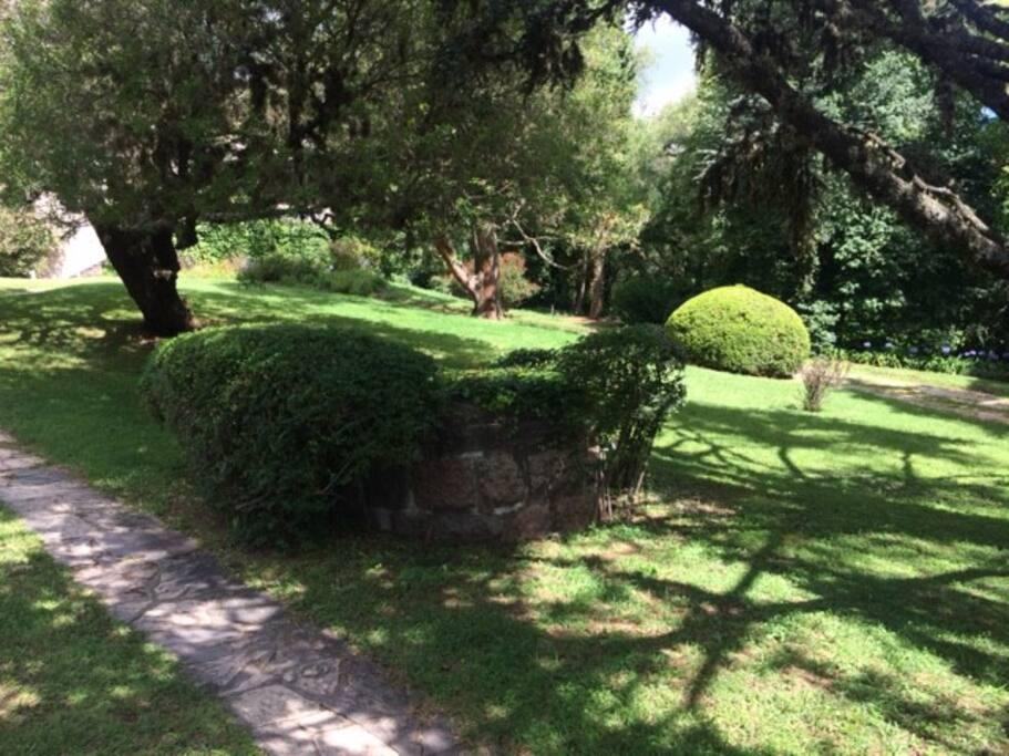 Driveway / Garden