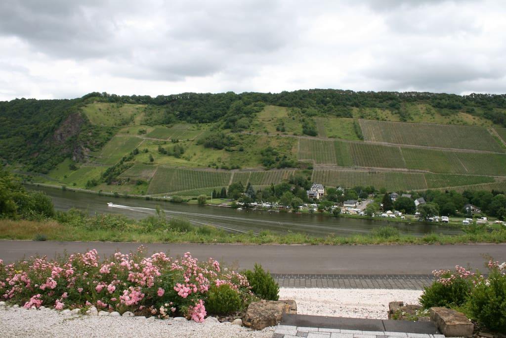 Blick von Ihrer Terrasse auf Mosel und Weinberge