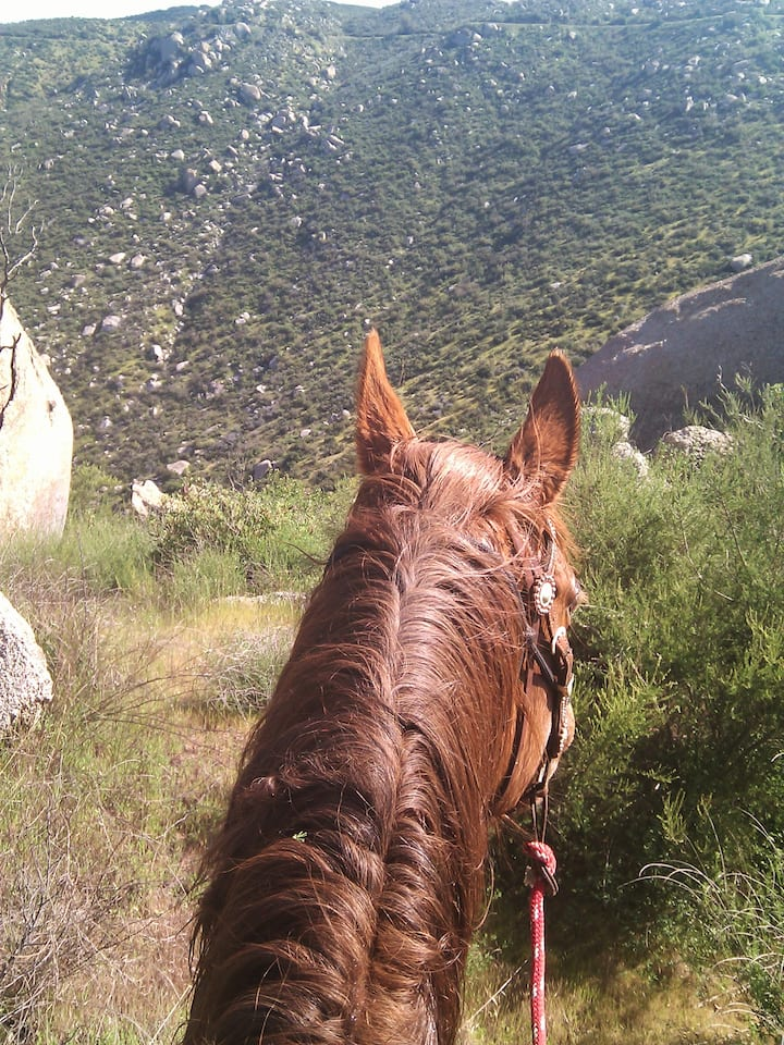 View from the back of a horse