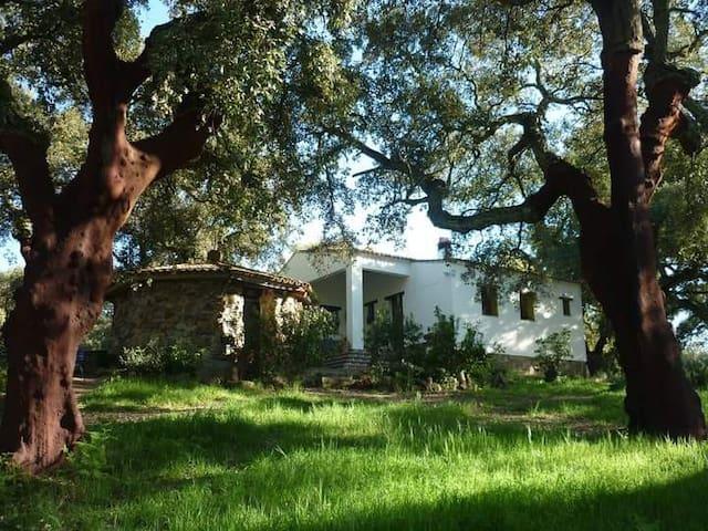 El Chaparral de Aracena, Alojamiento Rural - Aracena