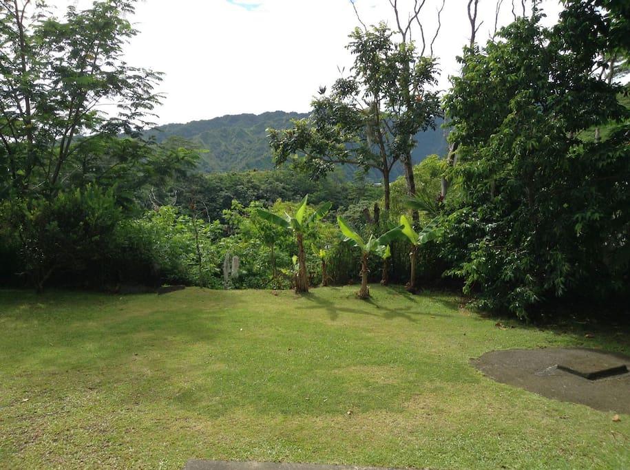 Le jardin coté montagne