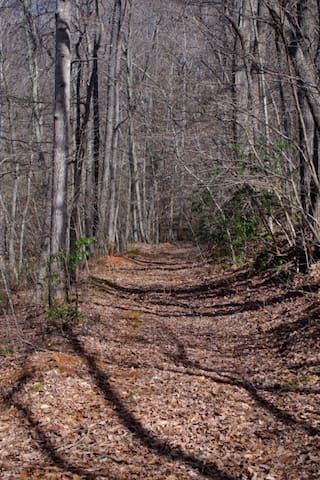 Old road across creek from cottage