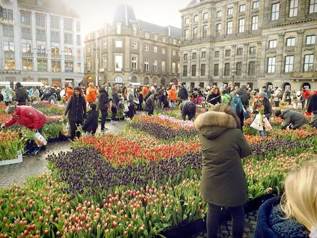 Tulipe-day on Damsquare