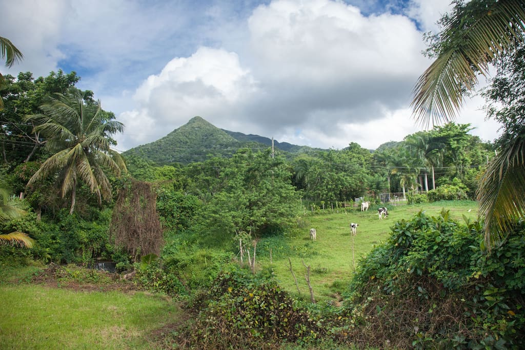 View of El Yunque National Rain Forest from the front of the house