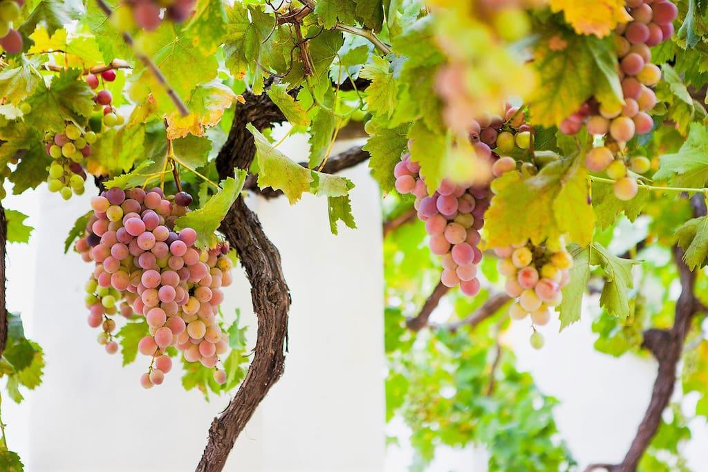 Situated on the Klein Nektar Wine & Olive Estate