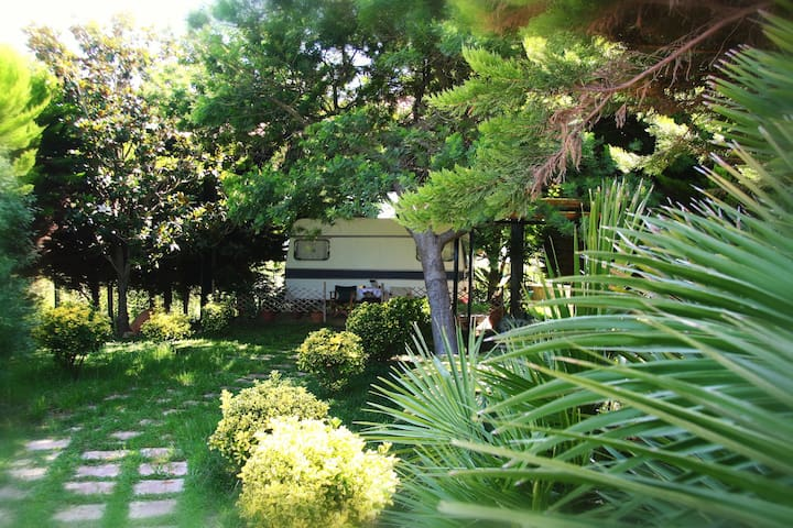 The green garden - Kourouta - Camper