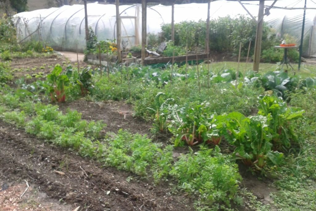 Organic vegie garden with hothouses. The property is a mini market garden.