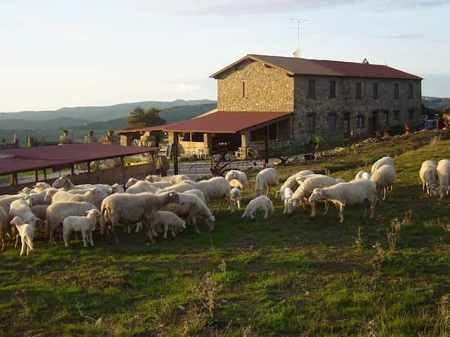 Apartment in a farmhouse on the Livorno hills