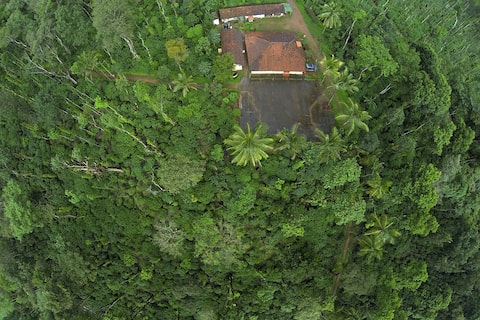 Live on a Coffee estate - Near the Jungle