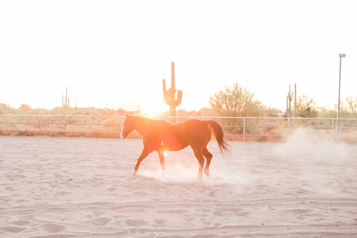 Ranch Retreat RV: Privately Gated Horse Ranch