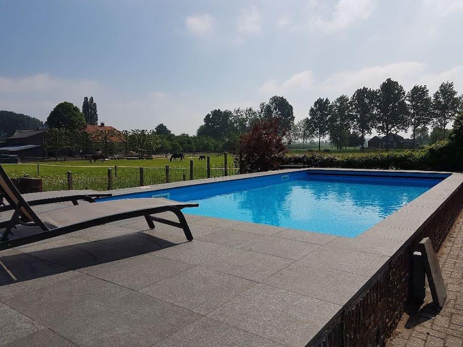 Vrij gebruik van het zwembad met ligbedden.
