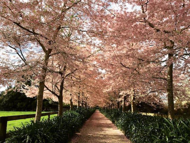 English Cherry Tree Manor, Hamilton
