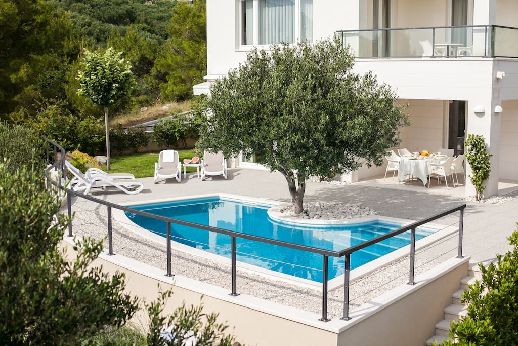Pool with olive tree above