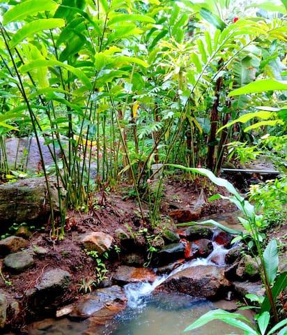 Garden Nature Stream