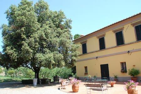 Palazzina tra gli olivi - Chianciano Terme - Bed & Breakfast