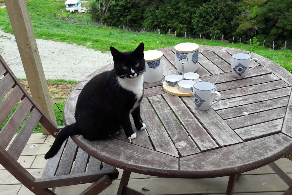 Blackie is a cheeky cat who loves to visit