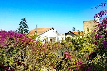 LeSaNel - Guest House - Arad - Casa de camp