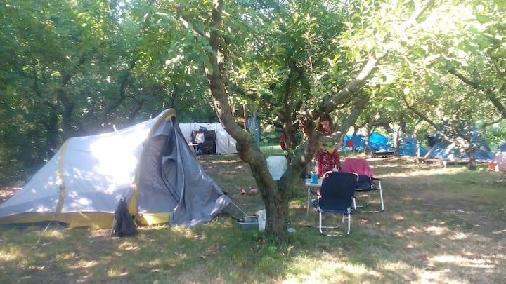 Private  tent in organic garden