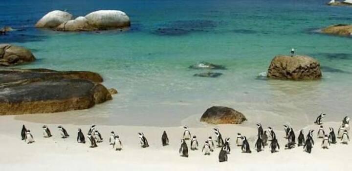 Cape point & African penguins