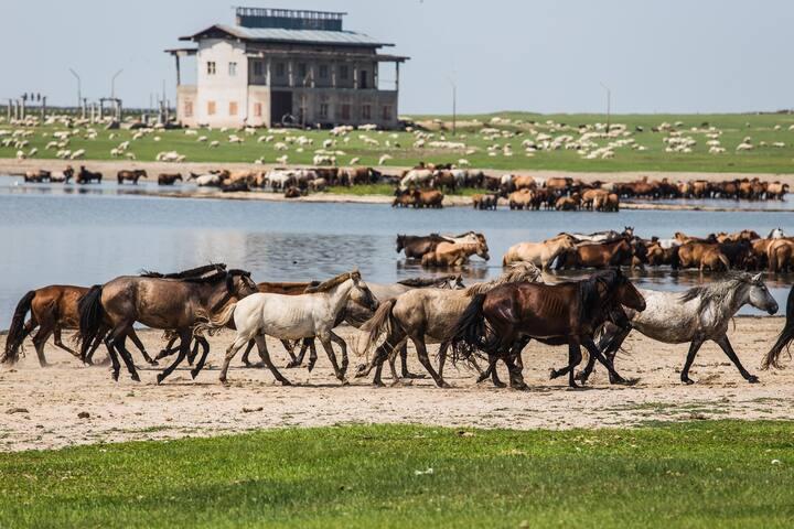 Farm Stay in cabin (#2) - Tsagaanders - Cabaña