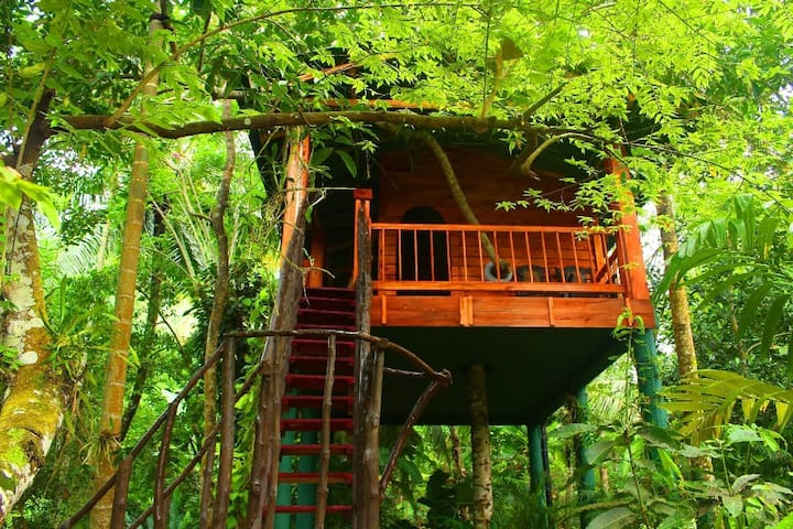 The Tree House - Midigama