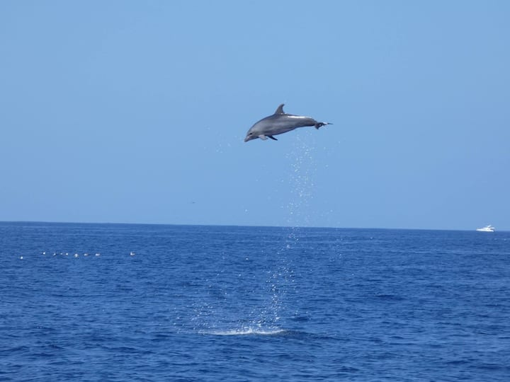 Sometimes the dolphs are jumping hiighhh