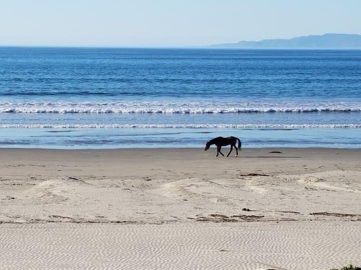 El Delfin: Cute, Cozy Apartment on Beach