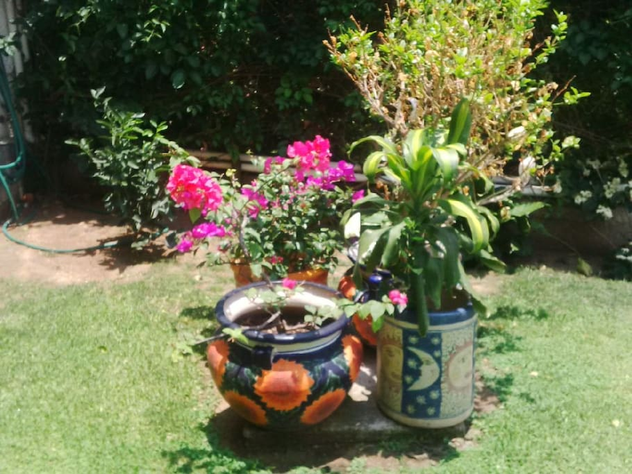 Divinas plantas