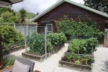 Garden area - great for sampling a ripe strawberry or grape (in season), fresh lettuce leaf or mint etc.
