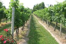Enjoy the many beautiful vineyards in our coastal town.