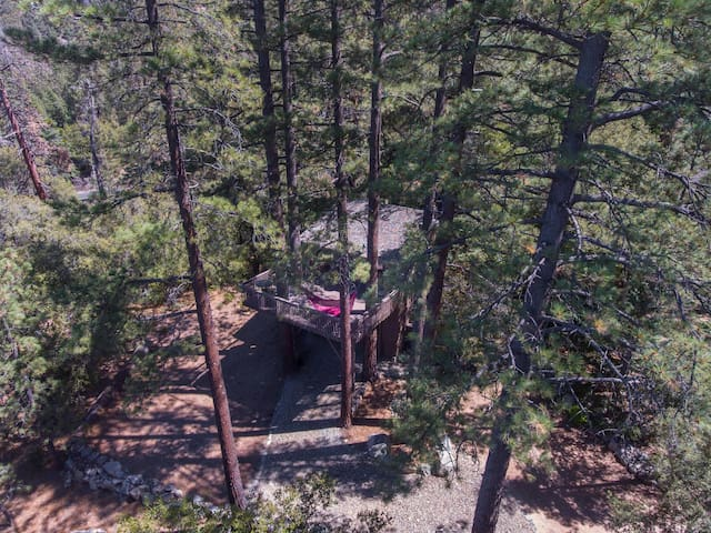 Several 100-foot pines stand as sentries over our half acre, including three right up through the deck.