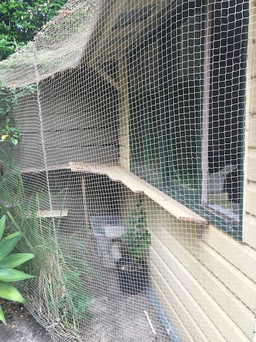 Outdoor cat enclosure attached to room.
