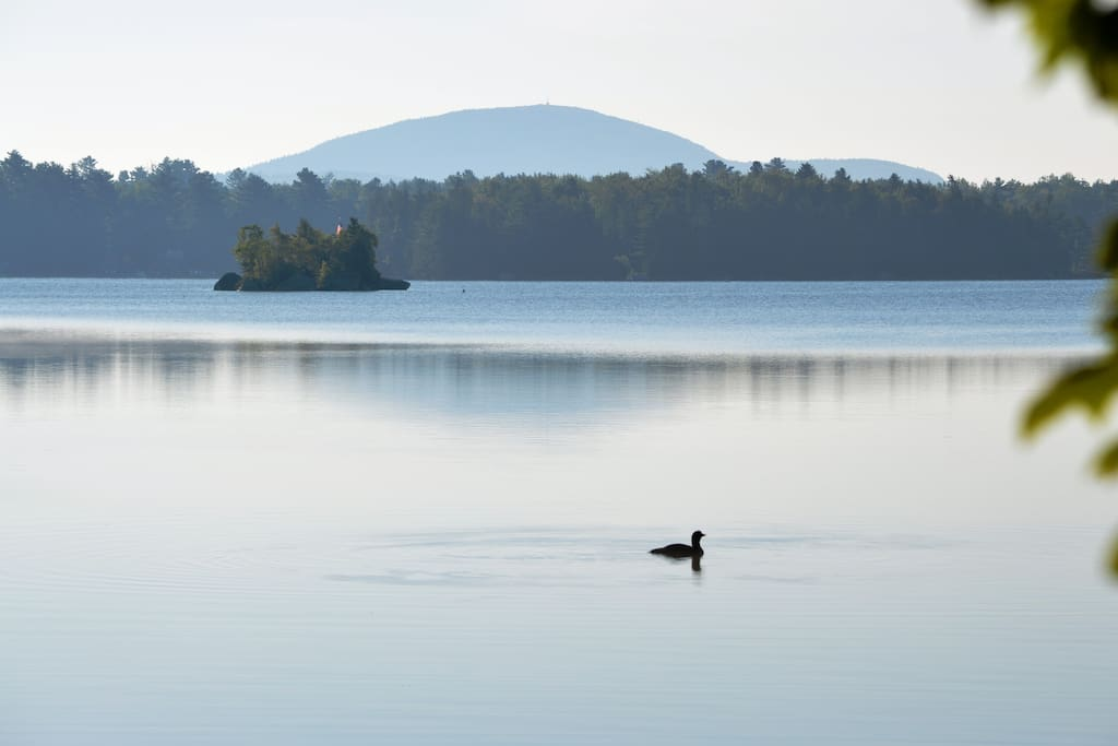 Georges Pond Haven View - Loon on the lake