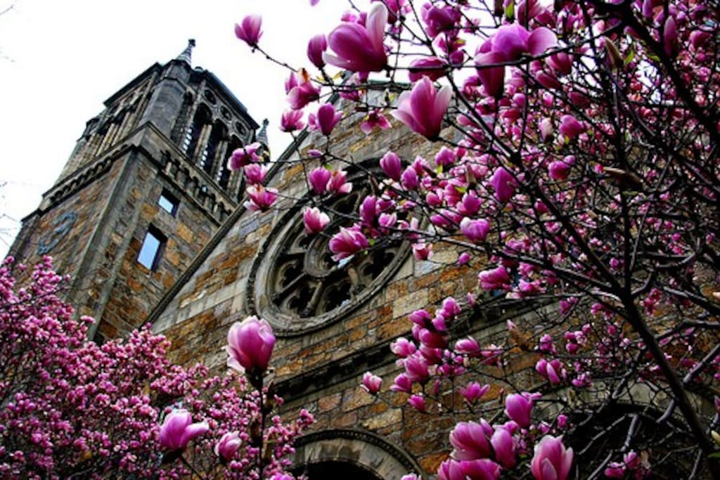 Back Bay church in the Spring (just a couple blocks away)