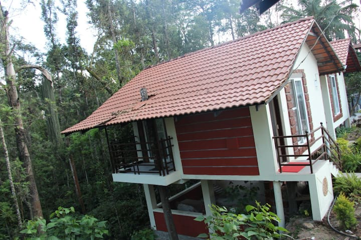 Serene mist resort (Chickmagaluru)3