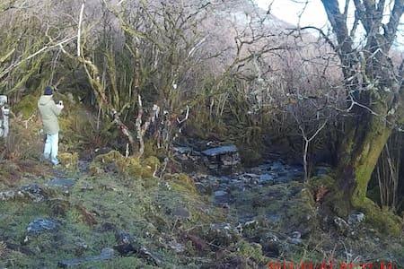 Poulacarran. The Burren - Clare