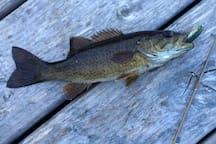 Lake is full of bass - fun for fishing!