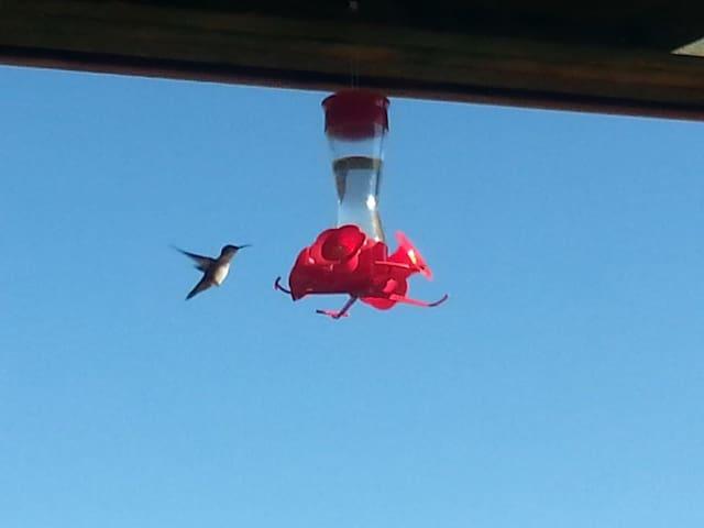 hummingbird feeding on our porch