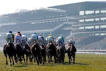 Cheltenham - horse racing and shopping in Regency spa town 29m