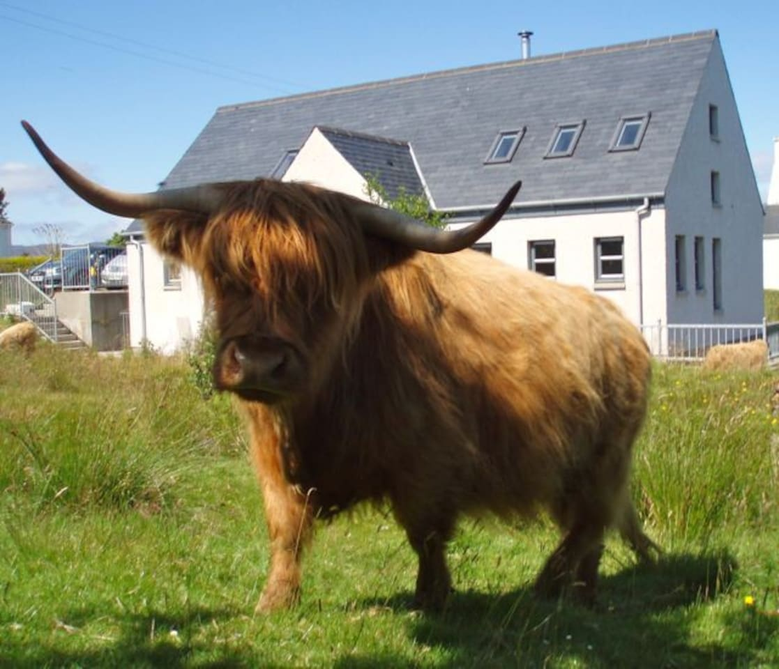Highland cows and sheep can graze right up to the door at Nanyuki!