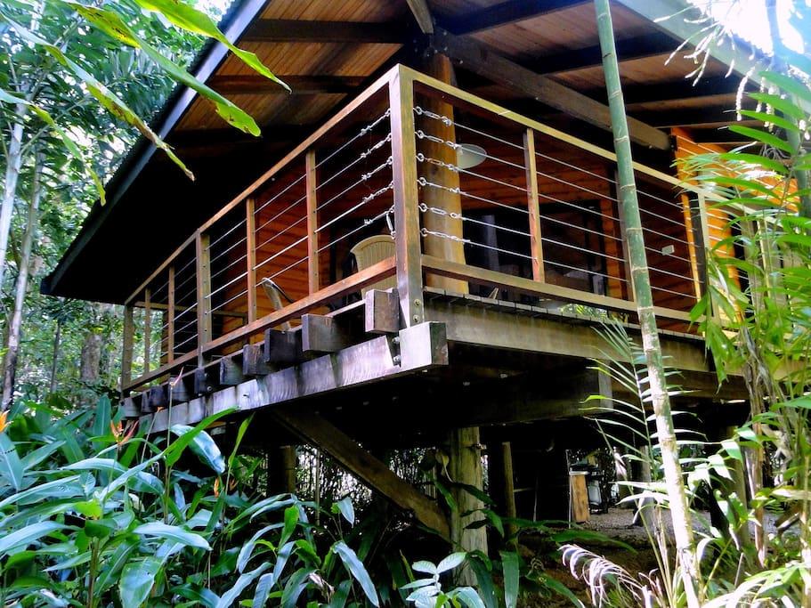 Spacious rainforest cabin