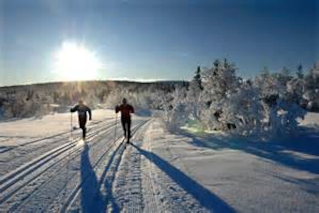 Cross-country skiing. Ski de fond. Langrenn. Øyer