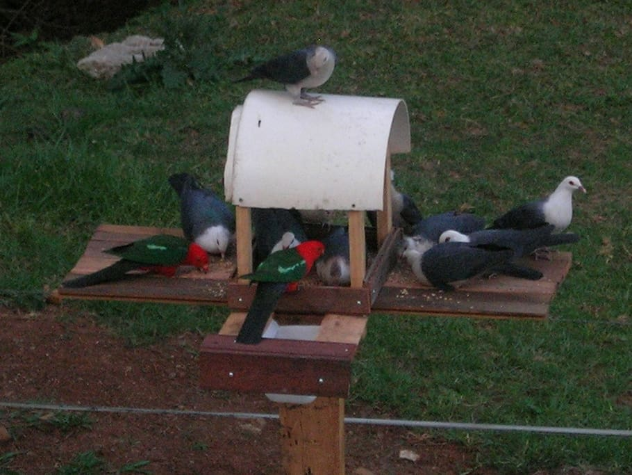 Bird feeder in BBQ area attracts many local birds.