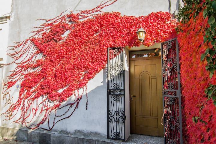 Edera Rossa - Osmate