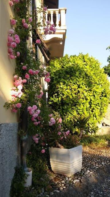 a part of the garden - una parte del giradino