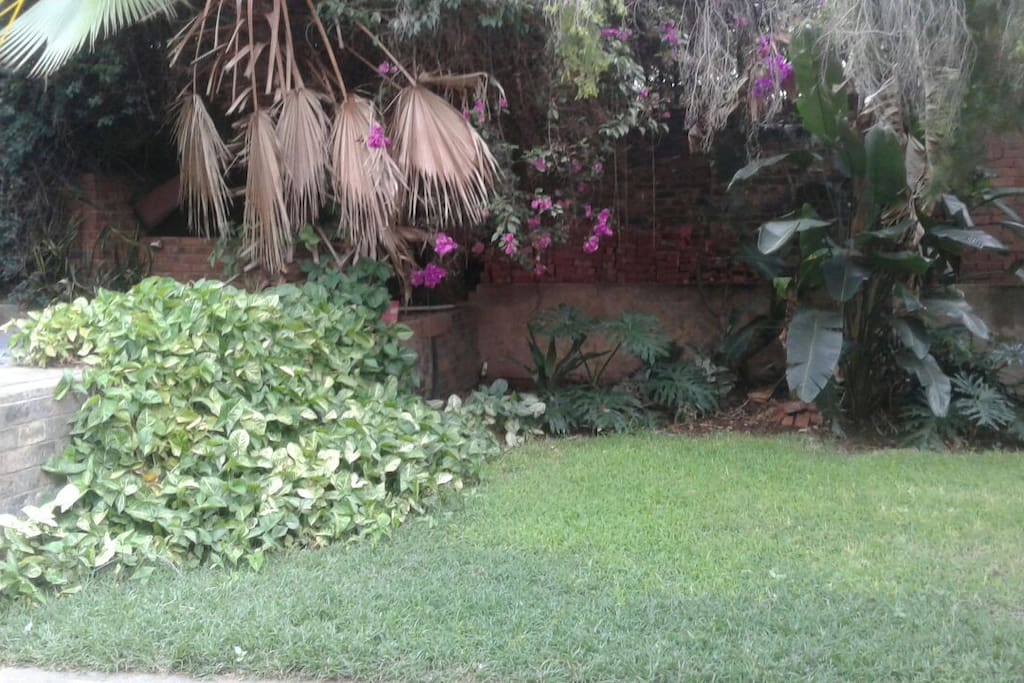 garden near braai area