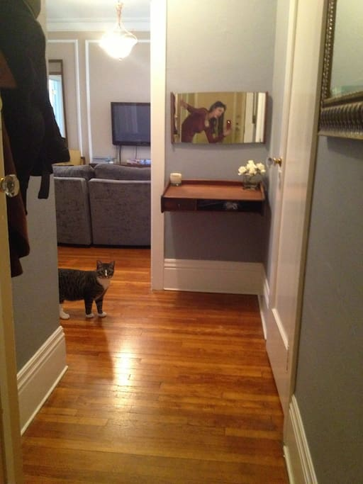 My cat hanging out in the entry way. The cats will not be present if the whole apartment is rented.