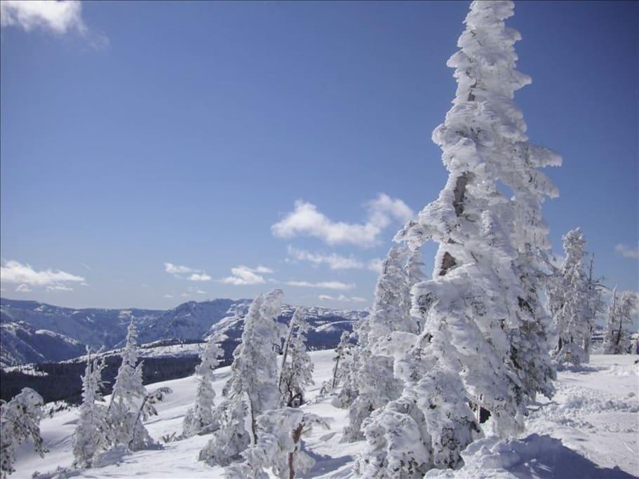 Downhill skiing at Sugar Bowl.