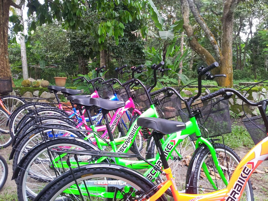 Bicycle renting are available