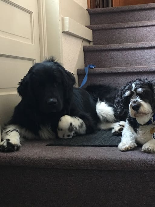 2 dogs in Home